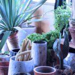 鉢+室内用植物