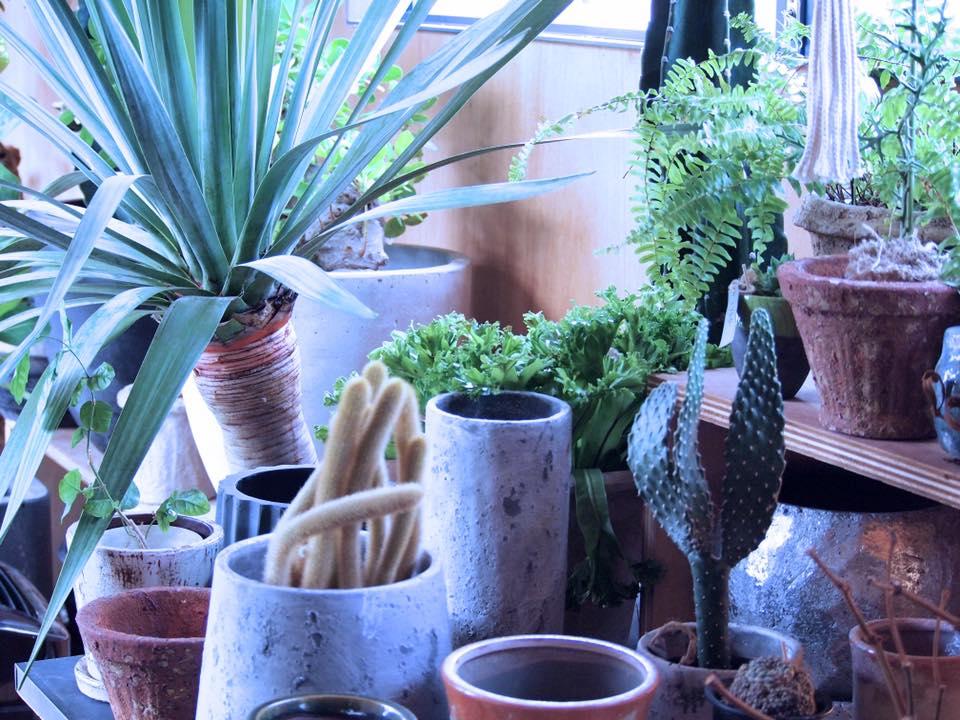 鉢+室内用植物 画像1