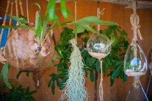 ハンギング(左からコウモリラン-椰子の実着生・ウスネオイデス・エアプランツ)