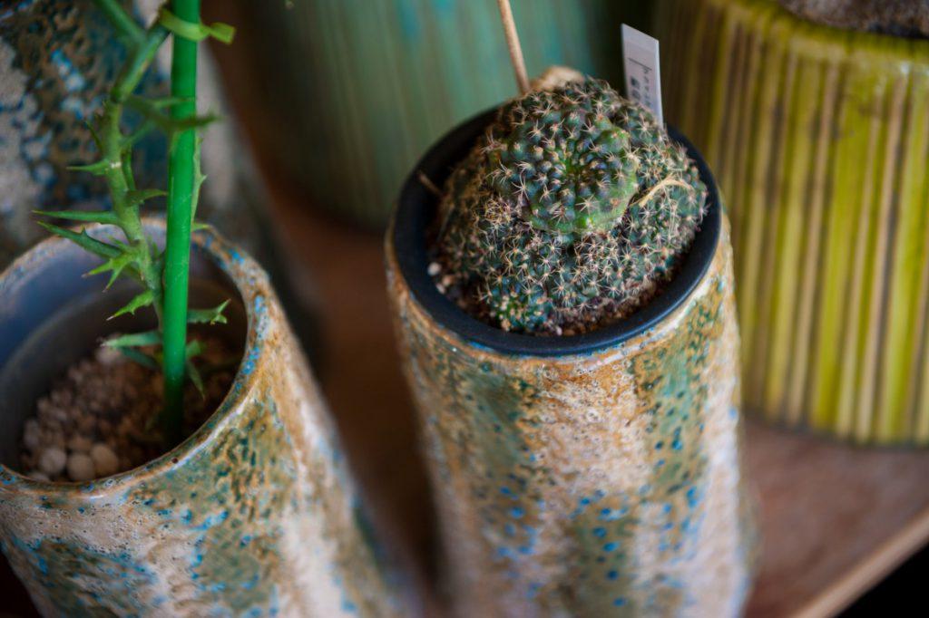 鉢+左からトナカイ・サボテン 画像1