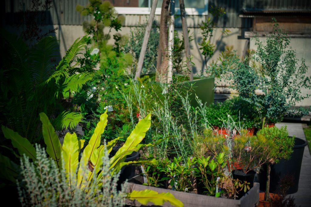 店外風景(屋外用植物) 画像1