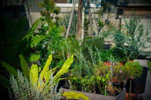 店外風景(屋外用植物)