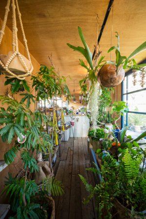 店内風景(室内用植物)