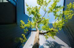 シンボルツリーのチカラ